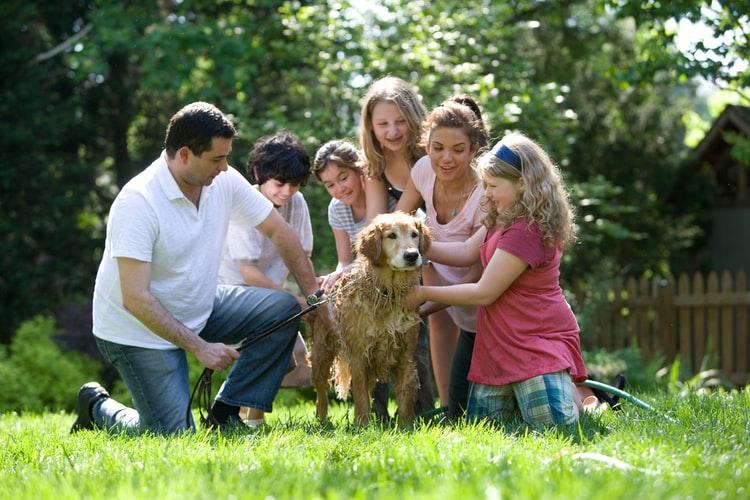 Montos de asignación familiar para monotributistas, Consulta actualizada